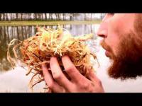 Silkysaws on a Bushcraft adventure!